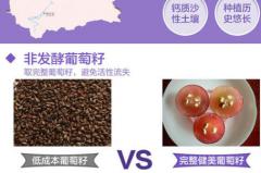 紫一葡萄籽是什么